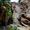 Indian Canyon in Palm Springs