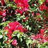 Spring Flowers in Palm Springs California