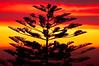 Sunset_Tree