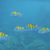 Snorkeling at Isla Coiba National Park