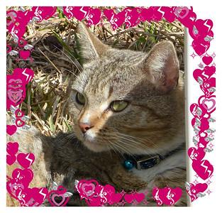 Happy Valentine's Day from Willis
