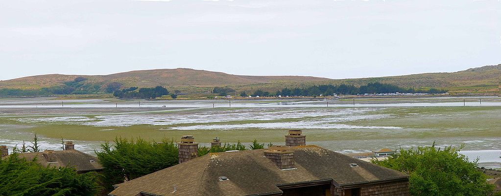Bodega Bay at low tide