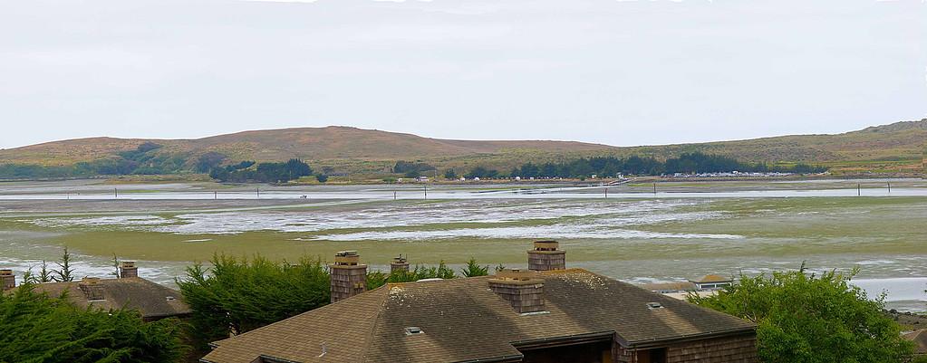 Bodega Bay at low tide