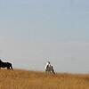 BLM Mustangs 01