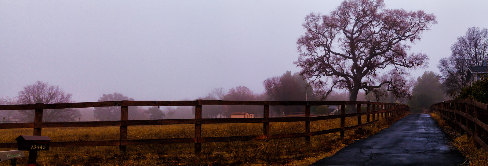 The Road in the Fog