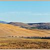 Oregon Cattle Drive