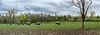 Buffalo at Quabache State Park, Quabache,Indiana