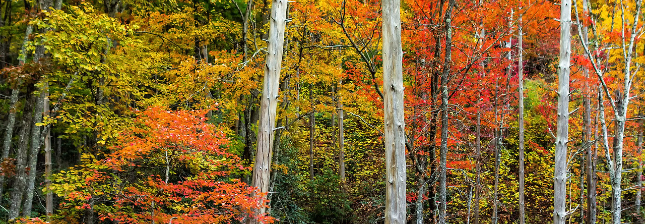 Rich Mountain Road - Great Smoky Mountains National Park