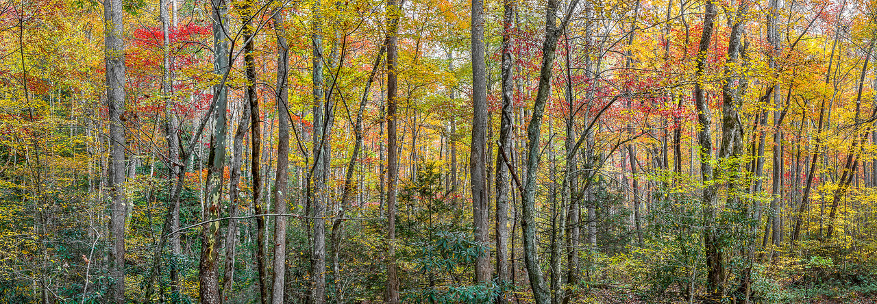 Roaring Fork Motor Trail - The Great Smoky Mountains National Park