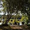 Bois du loup, Erdeven, panoramique 12 images
