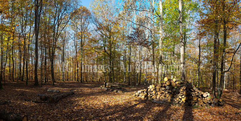Allier, forêt de Dreuille, panoramique 9 images, F/7,1, 1/80, iso 200, 24 mm