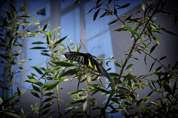 #Papillons2015 |Québec