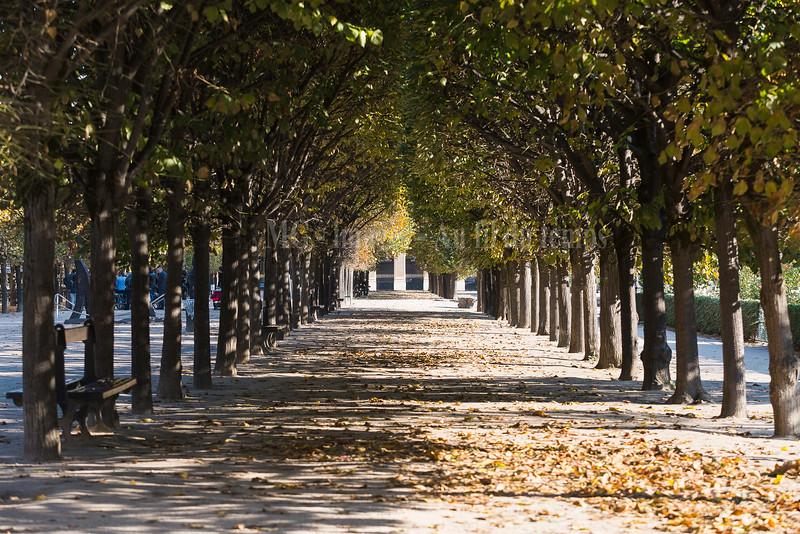 Jardin du Palais Royal, f/5, 1/200, iso 200, 95 mm