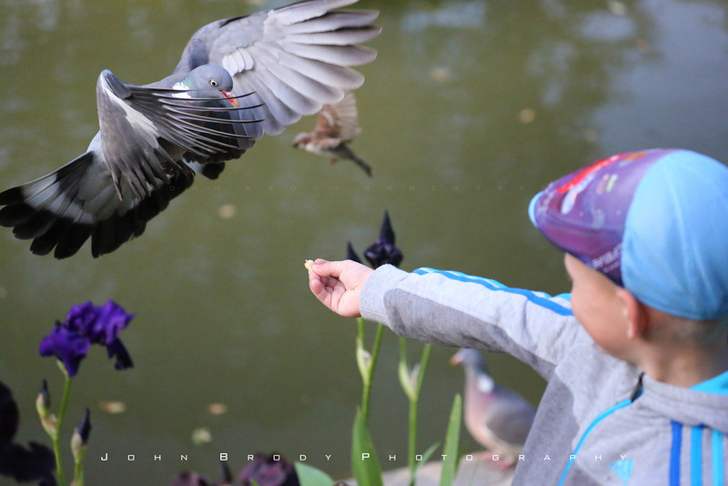 A young boy I taught how to feed the birds giving it his first try... Success.