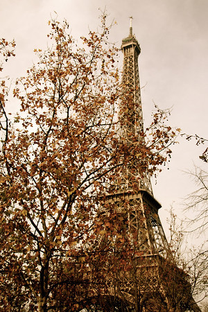 Eiffel Tower through trees