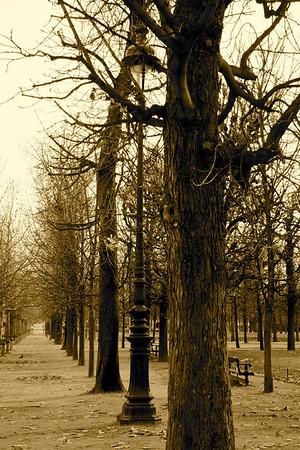 Tree line, Jardin des Tuileries
