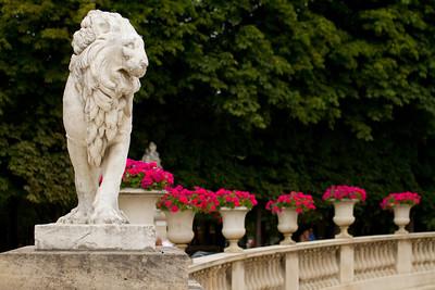 Lion - Jardin du Luxembourg