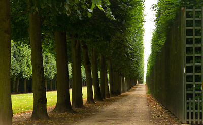 Tree tunnel, Versailles