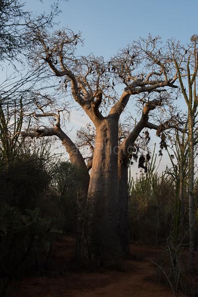 Bao bao tree