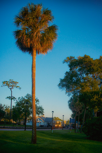 WPP2438   Lone Sabal Palmetto and the Train Station