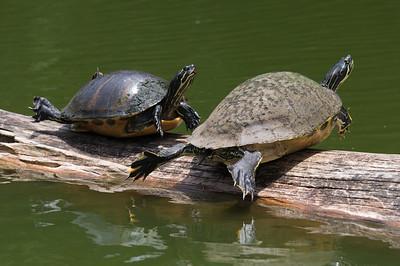 Hillsborough River Canoe Trip 2013-05-26