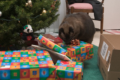 Mushu continues his hunt for gifts