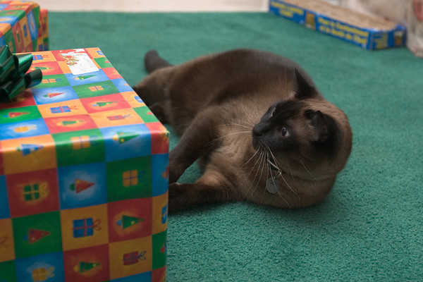 Mushu is ready to open presents