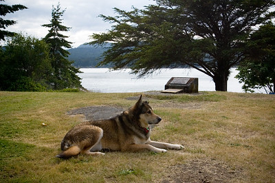 "A dog rests near the dedication plaque for the ""Active Pass Lightstation"""