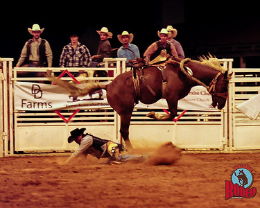 Gainesville Bulls and Broncs Rodeo Friday Sept 19, 2015