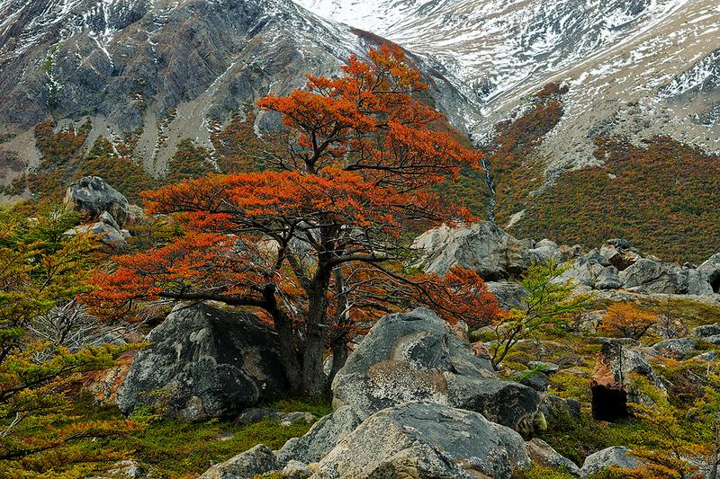 #Pat 356 Lenga Tree Rock Garden, Argentina