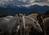 Horses at Estancia Nipebepo Aike