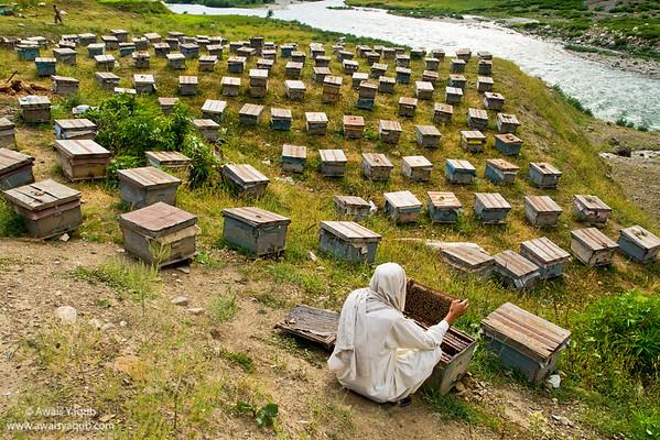 Bee Farmer along side Kunhar river