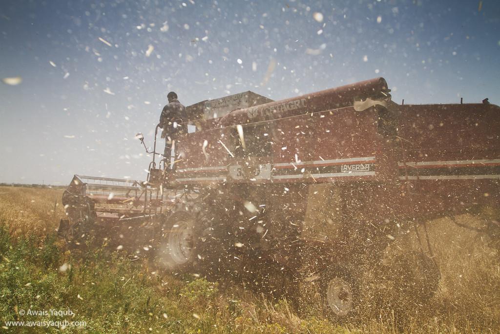 Wheat harvesting in process, published in Süddeutsche Zeitung Magazin December issue