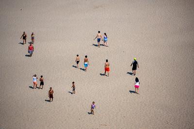 Sand Ants