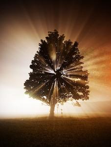 Fog Light Tree