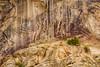 Desert Bighorn Petroglyph and Hunter, Echo Park, Dinosaur Nation