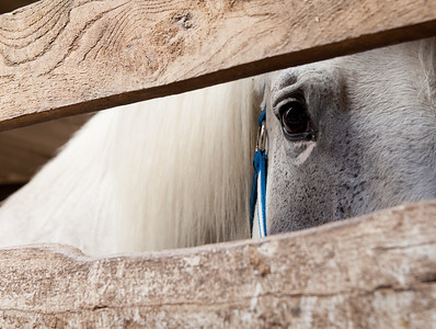 """Destiny"": waiting in a stall at a horse sale....."