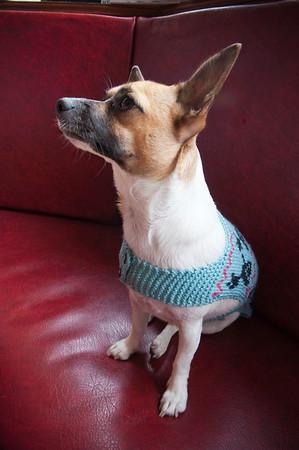 Widget Knit