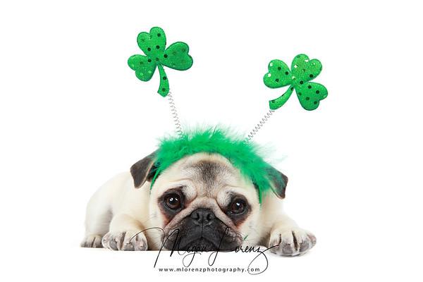 Piglet The Pug on St. Patrick's Day 2020