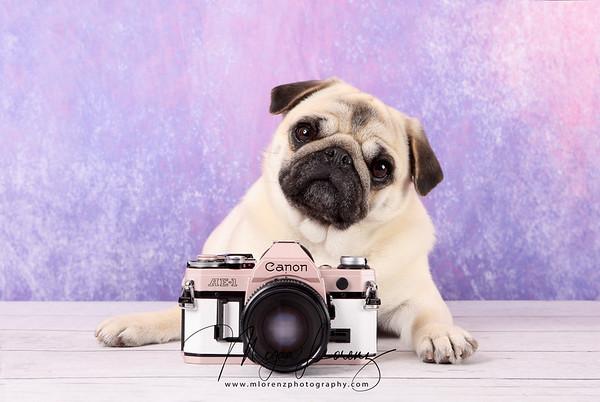 Pug Puppy with a custom vintage camera.