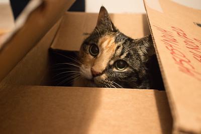 Nala playing in a box.