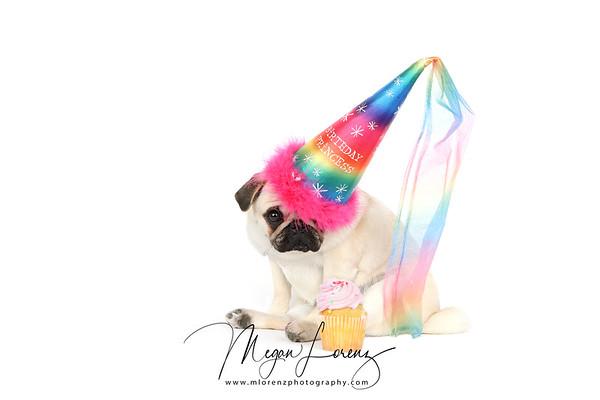 Happy 1st Birthday Piglet.
