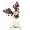 Pug dressed in Reindeer Antlers for Christmas.