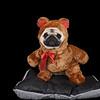 Cute pug dressed up as a teddy bear.