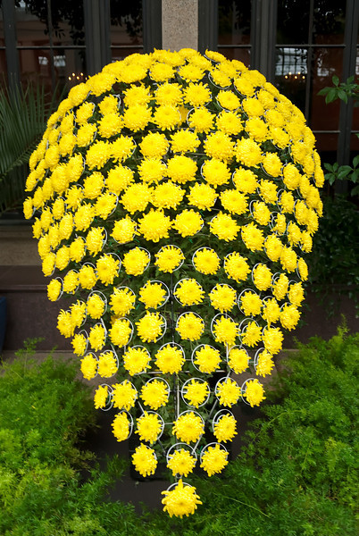 chrysanthemum shield composed of 173 chrysantemums