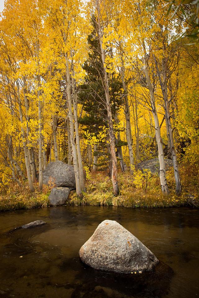 Fall foliage, Eastern Sierra Nevada, near Bishop, CA. September 26th.