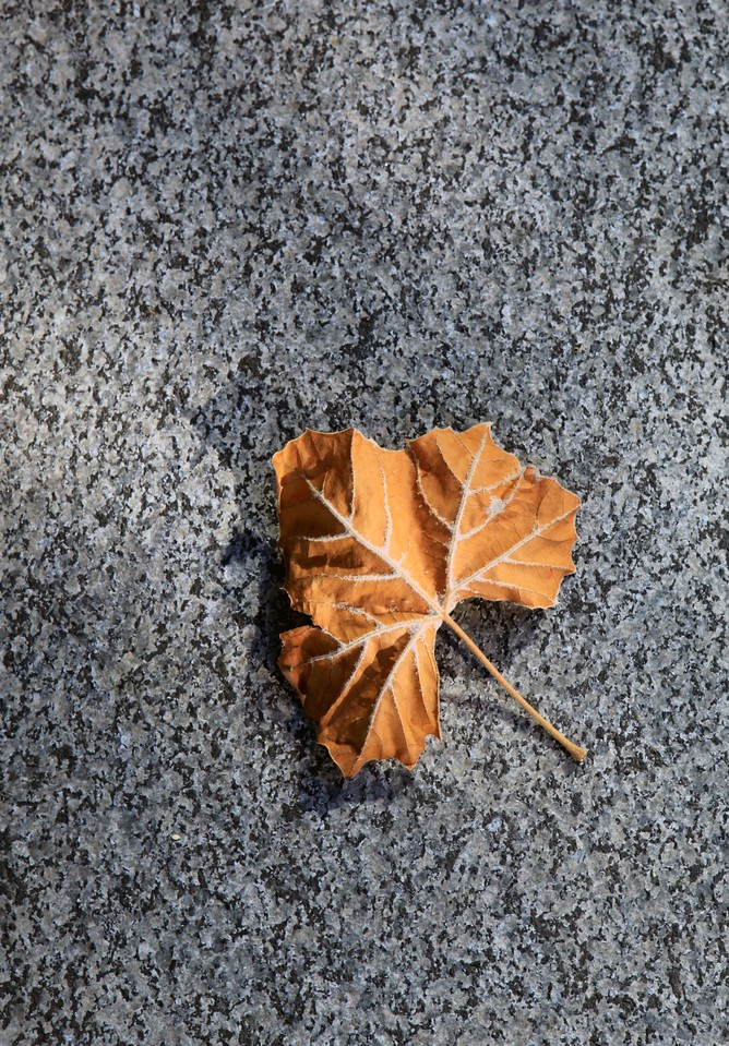 The first hint of Fall -- a fallen leaf that landed on a slab of granite in front of the Federal Building in downtown Oakland, CA. The evening sun was filtering through a nearby tree and the smallest of rays found their way to this wayward leaf. August 20th.