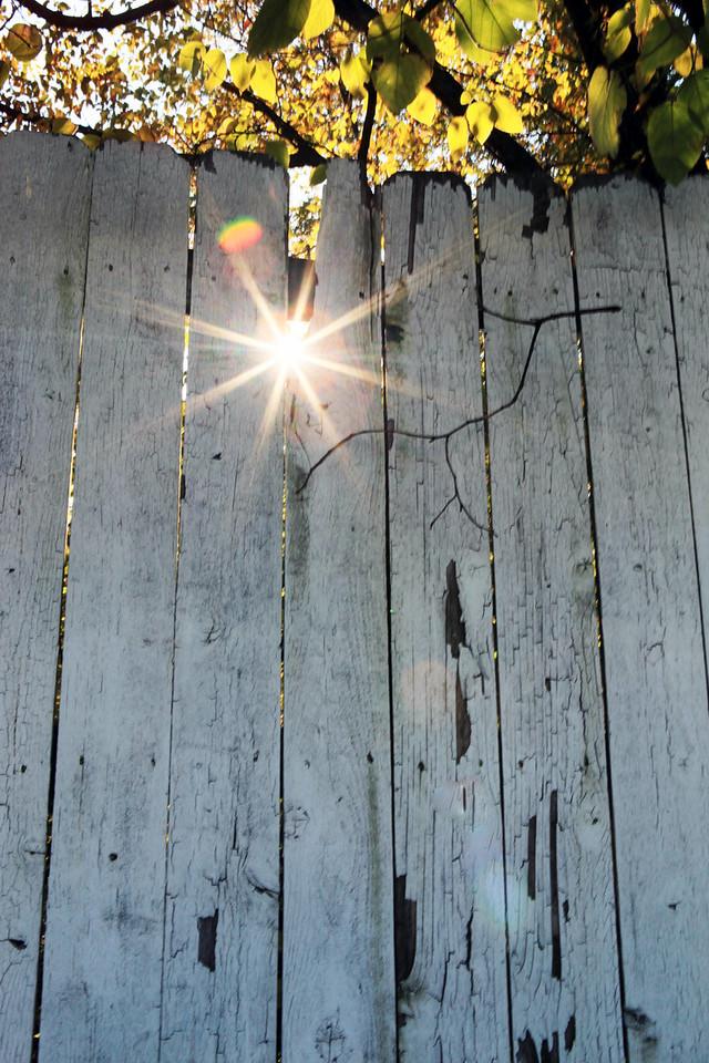 Sun star peeks through an old rickety fence. November 8th, Memphis, TN