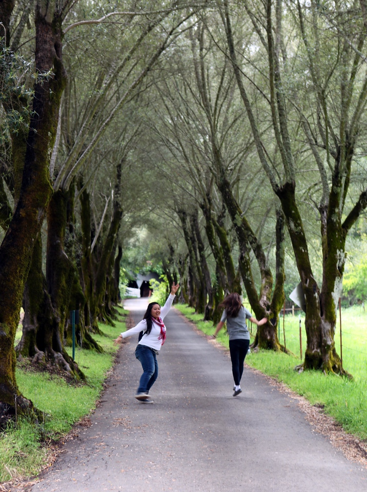 Young counselors at an outdoor camp for kids, skipping down the lane. Napa, CA. May 27th.