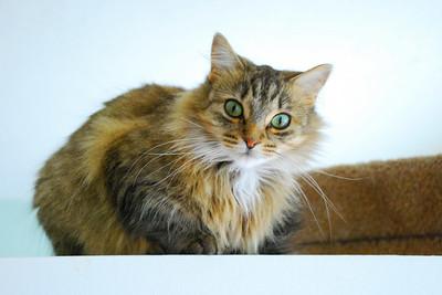 Kitty Witty Velvia